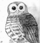 Owl Sketch Picture