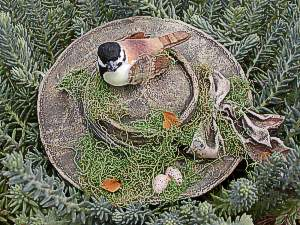 This Chickadee is nesting in an old bonnet