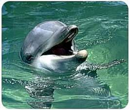 Dolphin Animal Picture