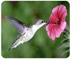 Beautiful photo of a Hummingbird