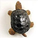 View details for this Turtle Magnet